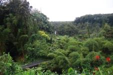 Akaka falls (cascade)